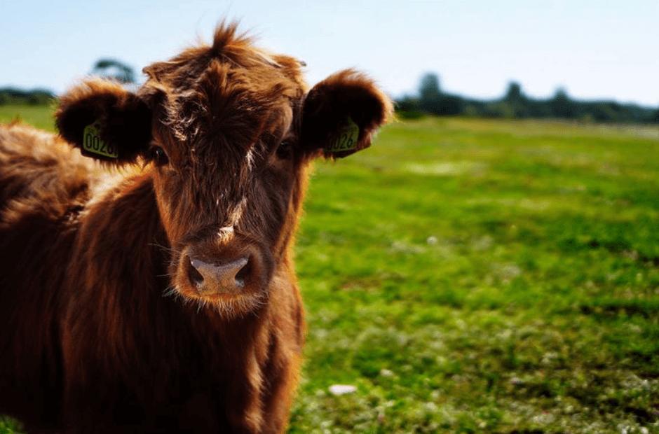 sector agricola en Canada